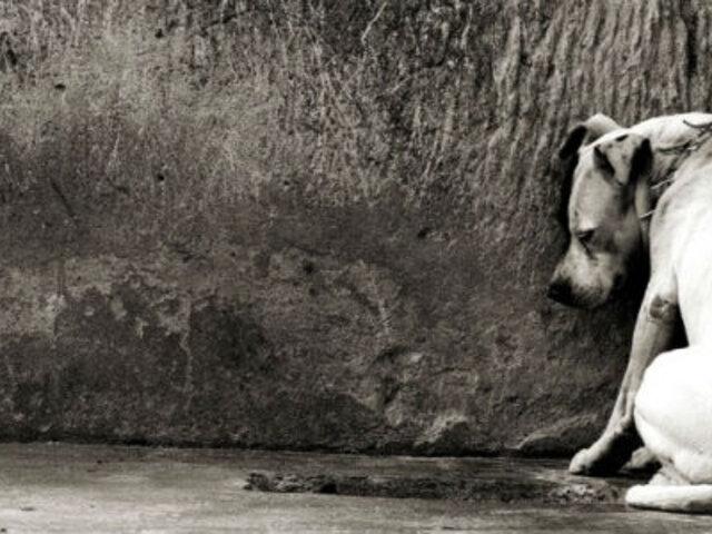 Pena de hasta 5 años de cárcel para quienes abandonen o maten a un animal