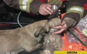 Bomberos salvan a perros: incendio se registró en vivienda llena de mascotas en Breña