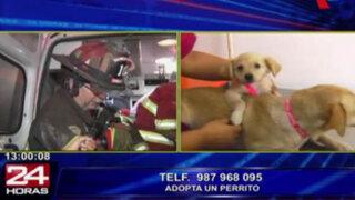 Breña: perros que resultaron heridos durante incendio requieren ser adoptados
