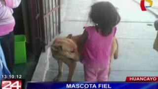 Huancayo: guiada solo por su olfato una perrita encontró a una niña