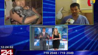 Barranco: tras denuncia de vecinos rescatan y ponen en adopción 16 perros