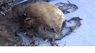 """Chile : ¿estos extraños restos óseos pertenecen a un """"chupacabras""""?"""