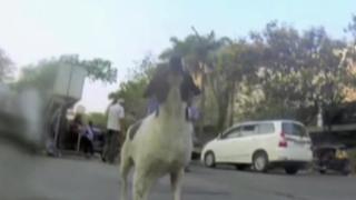 Penurias de un perro callejero: cámara GoPro capta maltratos a animal