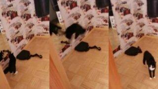YouTube: mira la divertida pelea entre un gato y su reflejo