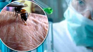 La clave para la cura del VIH podría estar en el veneno de las abejas