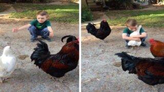 YouTube: tierno abrazo entre un niño y su gallina se convierte en viral