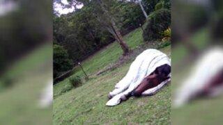 YouTube: a este caballo le fascina dormir con su almohada y su manta