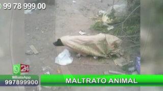 WhatsApp: perrita es abandonada dentro de costal en un basural de Independencia