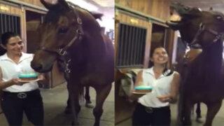 YouTube: caballo sorprende al apagar velas de cumpleaños de un 'soplido'