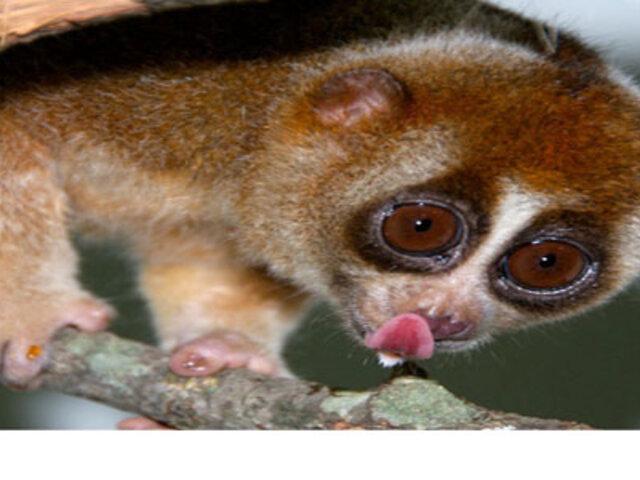 """FOTOS : 8 animales """"adorables"""" que pueden ser muy peligrosos"""