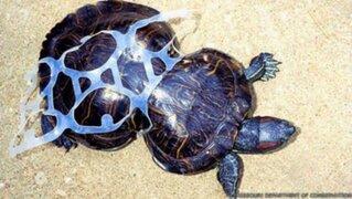 Conoce la triste historia de Cacahuete, la tortuga deformada por la basura