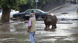 Georgia: 12 muertos y animales sueltos en Tiflis tras fuertes inundaciones