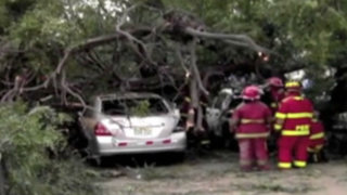 Caída de viejo árbol pudo provocar una tragedia en San Isidro
