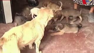 Conoce la lamentable situación en la que viven estos perros que esperan ser adoptados
