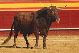 Hombre muere tras ser corneado por un toro en tradicional encierro en España