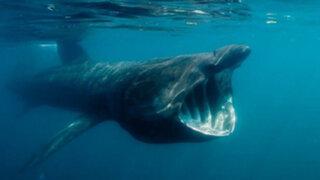 FOTOS : 15 aterradoras criaturas acuáticas que jamás quisieras encontrarte