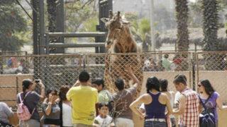 Situación en Parque de las Leyendas: director niega que animales estén en malas condiciones