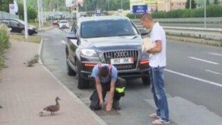 Eslovaquia: policía rescata seis patitos que cayeron en una alcantarilla