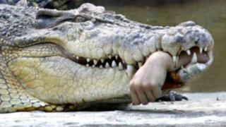 Mordidas asesinas: Los más sangrientos ataques de cocodrilos