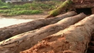 Carretera clandestina: Sierra del Divisor en riesgo