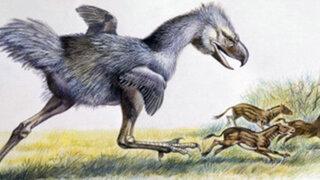 Descubren fósiles de un extraño mamífero de más de 5 millones de años