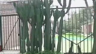 Vecinos invaden espacios públicos en La Molina