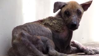 La conmovedora transformación de un perro que fue encontrado en un estado lamentable