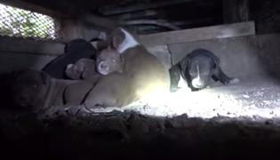 VIDEO: rescate a cachorros que vivían debajo de casa conmueve en redes sociales