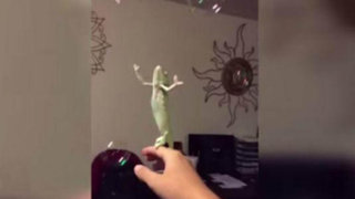 VIRAL: simpática camaleón se divierte reventando burbujas de jabón