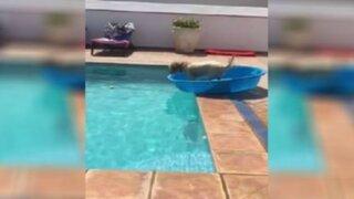 YouTube: perro asombra al mundo con sorprendente truco en piscina