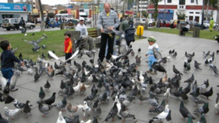 Vecinos serán multados por alimentar palomas en La Punta