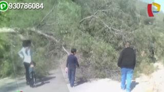 Huarochirí: árbol estuvo a punto de causar una tragedia al caer en transitada carretera