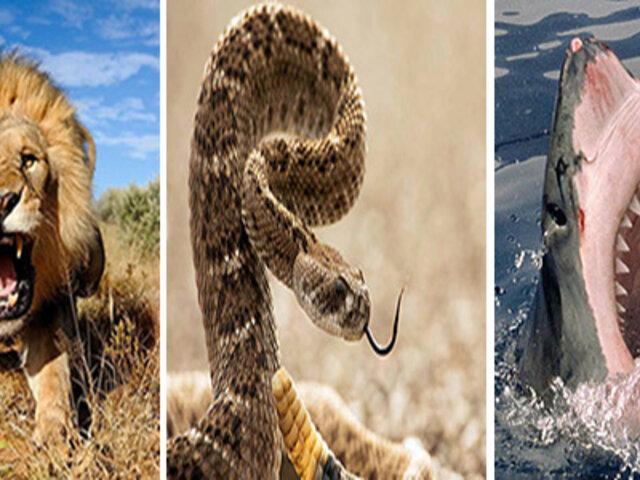 Este es el animal que provoca mayor cantidad de muertes al año