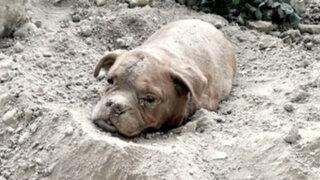 FOTOS: sujeto amarró, metió en bolsa y enterró vivo a un perro