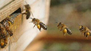 Picaduras que sanan: El poder curativo de las abejas