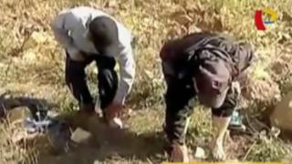 Cajamarca: rondas urbanas castigan con hormigas a ladrones