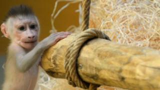 Pareja de esposos roba este tierno monito de zoológico por un conmovedor motivo