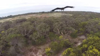 YouTube : así fue el encuentro entre un águila y un drone en pleno vuelo