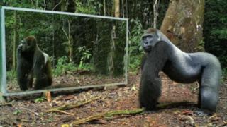 YouTube: así reaccionaron estos animales salvajes al verse en el espejo