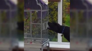 VIDEO: loro que se 'burla' de perro causa sensación en internautas