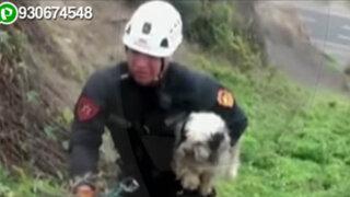 Policía despliega operativo para rescatar a perrito que cayó a acantilado