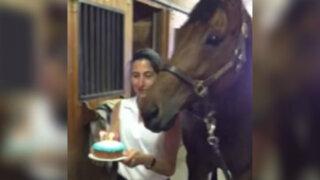 YouTube: conoce al caballo que 'celebra' su cumpleaños al estilo de un humano