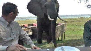 Elefante irrumpe almuerzo de turistas en Zimbabue