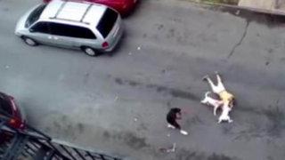 Impactantes imágenes: brutal ataque de dos perros pitbull a un anciano