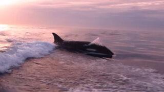 Salieron a pescar tranquilamente y terminaron siendo perseguidos por una orca