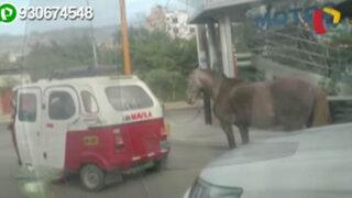 Cajamarca: usuarios de redes sociales protestan por maltrato animal