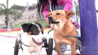 Perros con discapacidad esperan ser adoptados