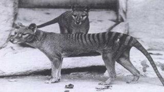 FOTOS: 10 animales extintos durante el último siglo que quizás no conocías