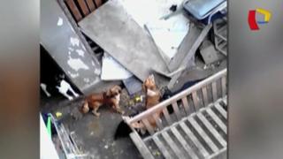 San Miguel: vecinos divididos por hombre que cría perros y gatos
