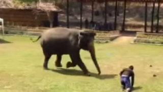 YouTube: Elefante salva a su cuidador que era atacado por un intruso